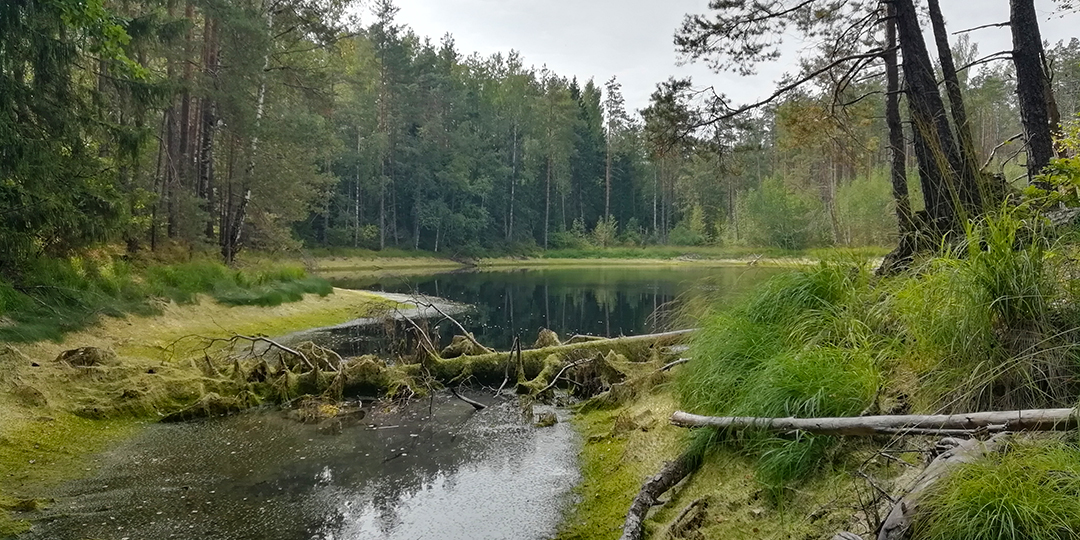 Мёртвое озеро Смоленское поозерье