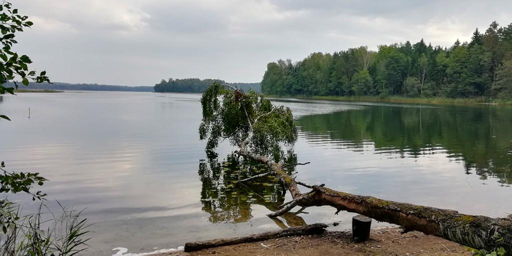 Озеро рытое у берега