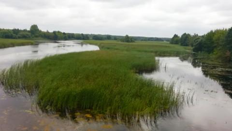 Обзор Заказника Ольманские болота