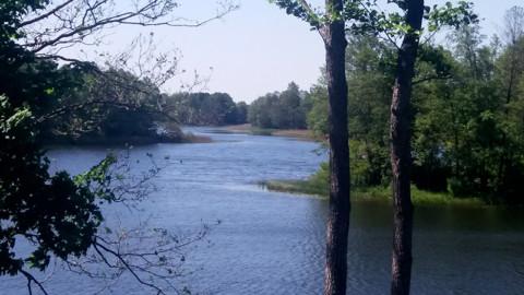Обзор Национального парка Припятский